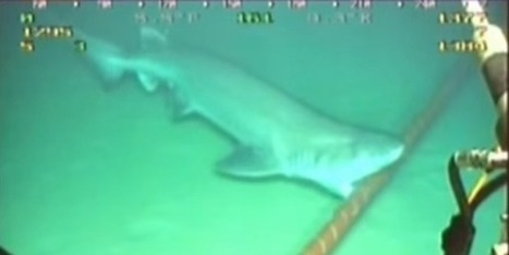 Google Has To Wrap Its Underwater Cables In Kevlar To Protect Them From Sharks | DuPont ASEAN | Scoop.it