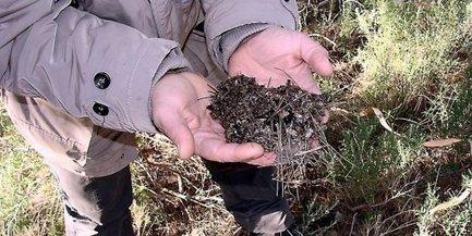 Mortalité des abeilles : c'est l'hécatombe dans les ruches des Pyrénées-Orientales | Abeilles, intoxications et informations | Scoop.it