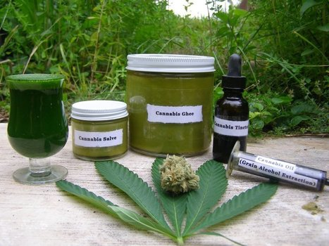 Hemp: Uses and Cures (Ghee and Herbal Extract Recipes Included!) | Inspired | Scoop.it