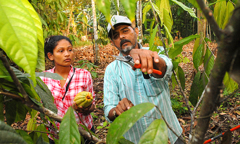 Le rideau de fumée de l'agriculture climato-compatible - CCFD-Terre Solidaire | Intervalles | Scoop.it