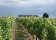 Chinon, les vignerons dans la ville   Agenda du vin   Scoop.it