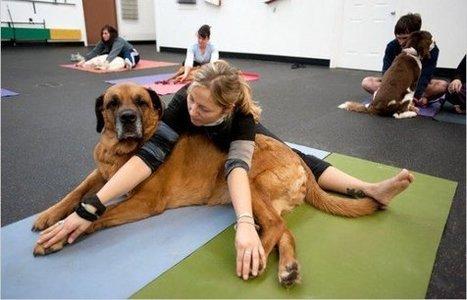 Tu ami lo Yoga? E il tuo cane fa Doga? Scopri lo yoga che coinvolge anche il cane di casa   Chic4Dog Care   Scoop.it