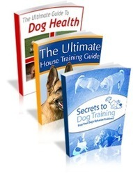 Kingdom of Pets eBook - The Best Dog Training - Kingdom of Pets Review | Custom made cat condos | Scoop.it