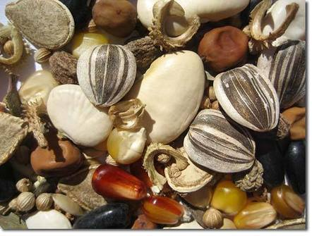 Seed Saving, Part 1: Seedy Issues | Transition and Permaculture | Scoop.it