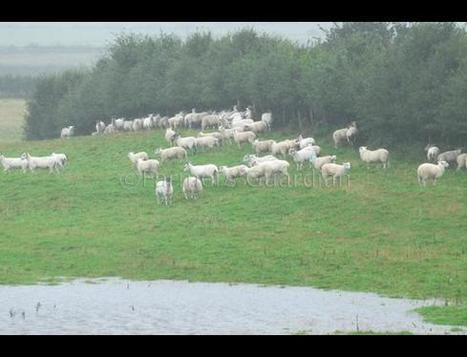 Farmers fear for feed as floods batter Britain | News | Farmers Guardian | The Barley Mow | Scoop.it