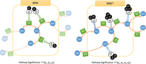 Reporter pathway analysis from transcriptome data: Metabolite-centric versus Reaction-centric approach | PlantBioInnovation | Scoop.it