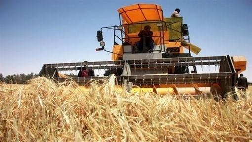 Algérie: Promouvoir l'investissement dans les filières agricoles stratégiques