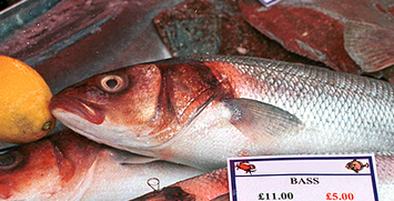 #Seabass in deep trouble !!! Marine Conservation Society  @mcsuk ~ too many #fished ! | Rescue our Ocean's & it's species from Man's Pollution! | Scoop.it