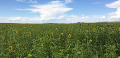 Researchers receive $1 million grant to study cropping systems in the Western Great Plains - SOURCE | food security and climate change | Scoop.it