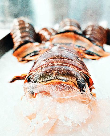Miami Seafood Restaurant | Seafood Restaurants in Miami | Scoop.it