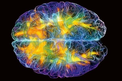 The WIRED guide to the brain in 2016 (Wired UK) | Fragments of Science | Scoop.it