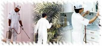 شركة لمكافحة الحشرات والصراصير 0548909302 | شركة التسويق الالكتروني | Scoop.it