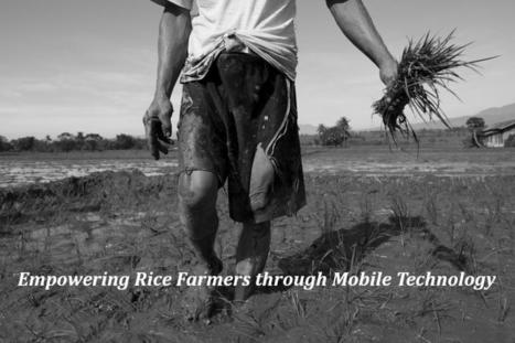 Empowering Rice Farmers through Mobile Technology | Peer2Politics | Scoop.it