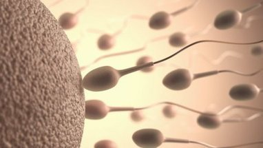 Premiers pas vers des spermatozoïdes artificiels humains | make up | Scoop.it