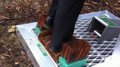 ABC News video: Boot cleaning machines to halt plant disease in tracks (2013) | Plants and Microbes | Scoop.it