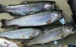 South Weeks Pond to get trout stockings » Times Record News Mobile | Global Aquaculture News & Events | Scoop.it
