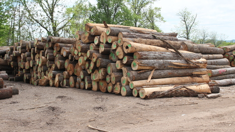 Help Wanted: Loggers For Tennessee's $21 Billion Forest Industry | Timberland Investment | Scoop.it