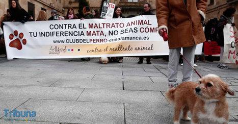Varios centenares de personas denuncian el maltrato animal - Tribuna de Salamanca | maltrato animal | Scoop.it