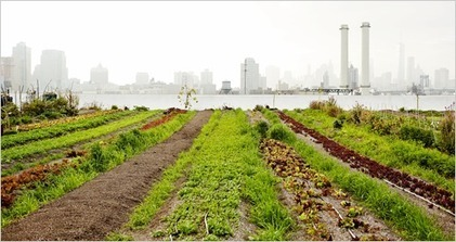 How might climate change affect our food supply? | Sustain Our Earth | Scoop.it