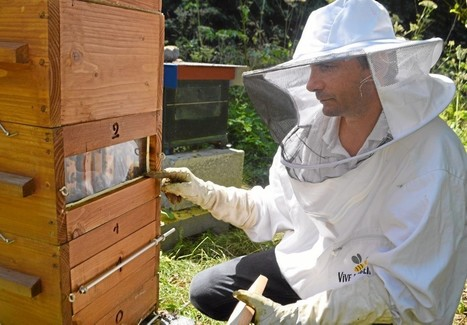 Apiculture. Une récolte de miel décevante dans le Calvados | Filière apicole française | Scoop.it