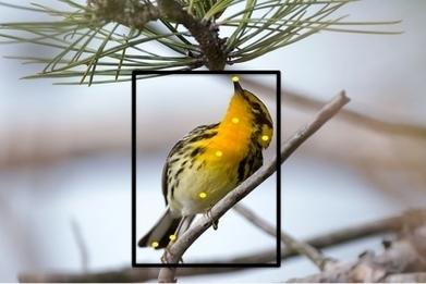 Tweet! Upload your bird photos, and Merlin IDs species | Cornell Chronicle | Cornell | Scoop.it