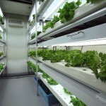 Agri-Cube Grows 10,000 Servings of Vegetables in a Single Parking Space | Anti-Aging methods | Scoop.it