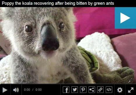 Du formol dans l'œil | EntomoNews | Scoop.it