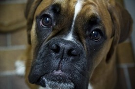 Fascinating Facts About Dogs | Natural Pet Care | Scoop.it