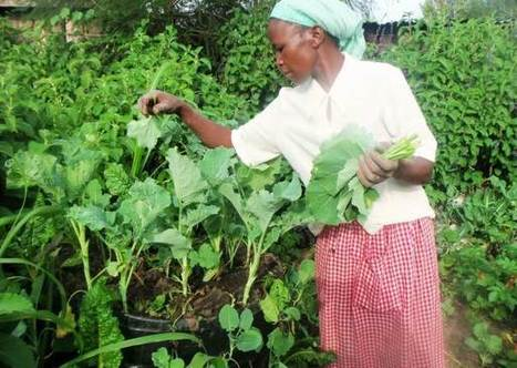 Kenyan women boost health and wealth by growing crops in sacks | Vertical Farm - Food Factory | Scoop.it