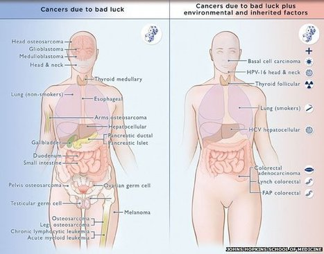So is cancer mostly 'bad luck' or not? | Medicina integrativa | Scoop.it