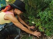 Fertiliser le sol | Veille sur les jardins | Scoop.it