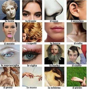 Timeline Photos - Vocabolario italiano illustrato | Italian Word of the Day | Scoop.it