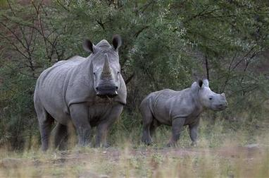 Tide turns on one front in Africa's war against rhino poachers | Reuters | NGOs in Human Rights, Peace and Development | Scoop.it