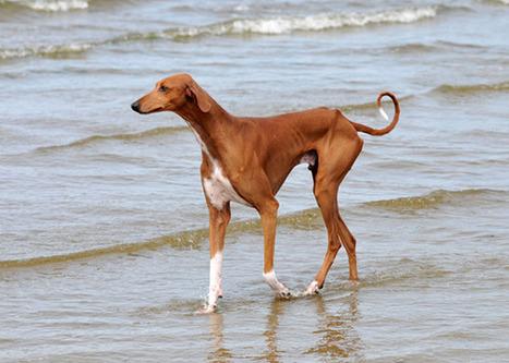 8 Amazing and Unusual Dog Breeds | Pet Health | Scoop.it