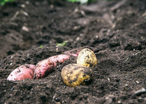 The Surprising Healing Qualities ... of Dirt | Organic Farming | Scoop.it