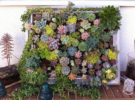 DIY: Framed Vertical Succulent Garden | Amazing Blades Landscaping | Scoop.it