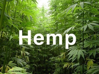 America's first hemp crop in 60 years was planted this week in Colorado | Agricultural Biodiversity | Scoop.it