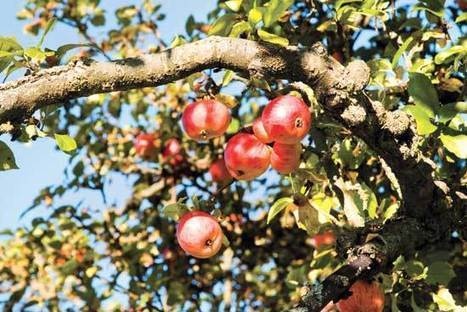 Communities Grow Stronger with Fruit Tree Projects | This Gives Me Hope | Scoop.it