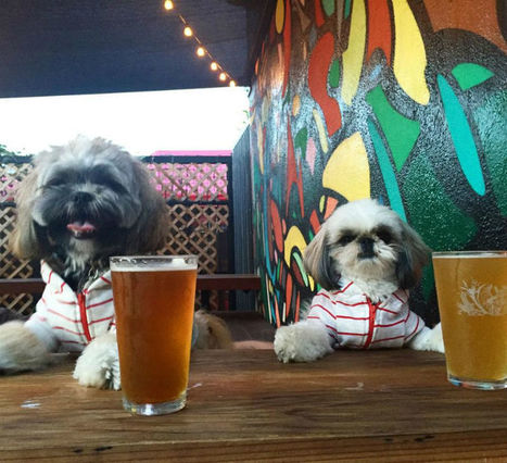 One Los Angeles Craft Beer Bar Merges Good Drinks With Pet-Friendly Awesomeness   News For public   Scoop.it