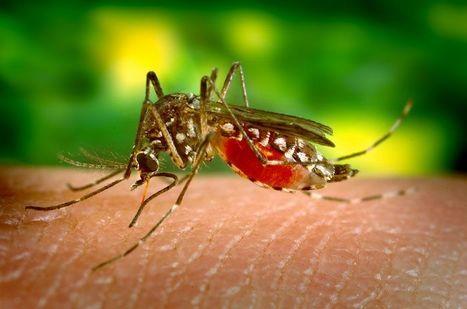 Un vaccin contre la dengue aux résultats encourageants | EntomoNews | Scoop.it