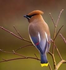 16th GBBC merges with eBird - 15-18 Feb 2013 — eBird   birding   Scoop.it