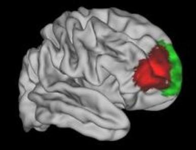 Encuentran la parte del cerebro que nos hace humanos | Cuerpo, Mente, Espíritu y Universo | Scoop.it