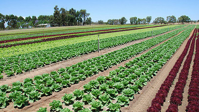Tough year has seen veg growers' profits plunge by more than 90% | Agricultural & Horticultural Industry News | Scoop.it
