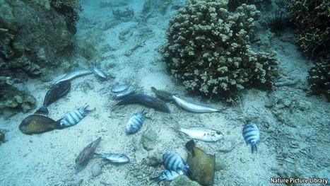An ocean of troubles | In Deep Water | Scoop.it