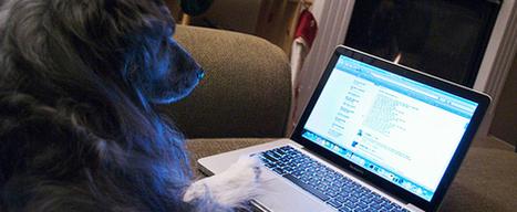 Sencillas aplicaciones online para ahorrar energía en casa | tecno4 | Scoop.it
