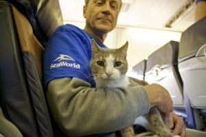 Cutest Flight Ever: Southwest Rescues 60 Pets Stranded By Sandy   celebrity pets   Scoop.it