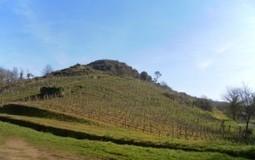 Douceur angevine & gueules de vignerons | CEPDIVIN - Les Imaginaires du Vin | Scoop.it