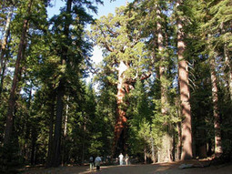 New Roads Into Yosemite Valley Rejected by Federal Court | Daily Crew | Scoop.it