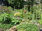 Plant Talk: Five Reasons Why Urban Farming Is The Most Important Movement Of Our Time   The Barley Mow   Scoop.it