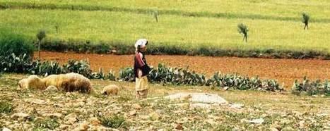 Lancement du nouveau site consacré au volet Sud de l'initiative ENPARD (European Neighbourhood Programme for Agriculture and Rural Development) - CIHEAM-IAMM   Chimie verte et agroécologie   Scoop.it